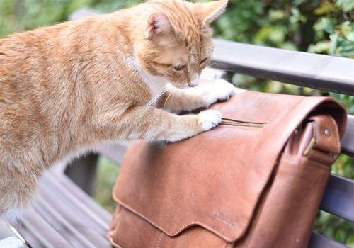 Gatto su borsa di pelle